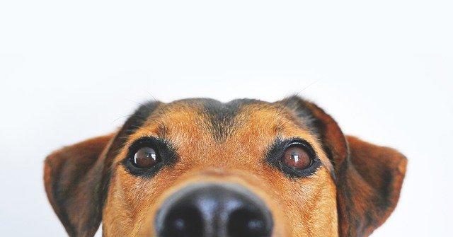 """Gutschein """"Hund & Kleintiere"""""""